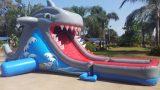 מגלשת מים כריש ענקית